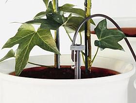 Wie Ihre Pflanzen Im Haus Den Urlaub Uberleben Ideen Zur Bewasserung